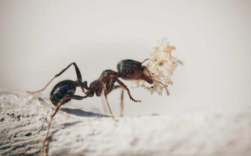 насекоми-вредители